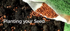 Planting your Seed
